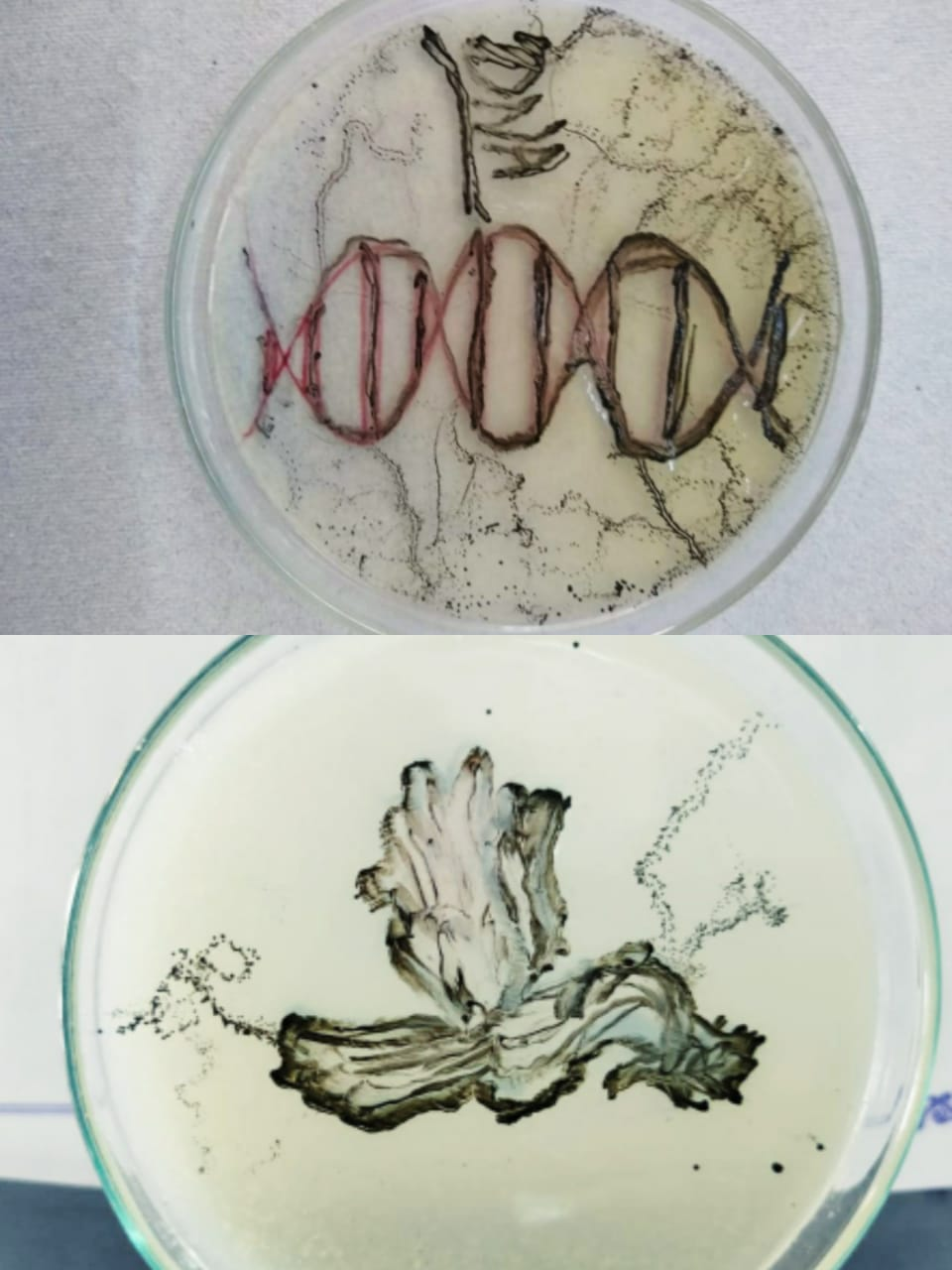 """""""Art with Microbes"""", at Dharampeth science College"""