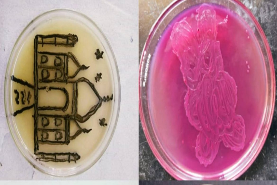 """""""Art with Microbes"""", a unique Competition Organised at Dharampeth M.P. Deo memorial Science College."""